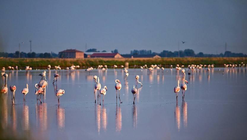 Parco del Delta del Po: Saline Cervia Fenicotteri